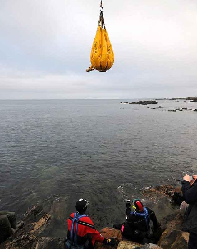 el congrio Rip es transportado en una bolsa con una grua