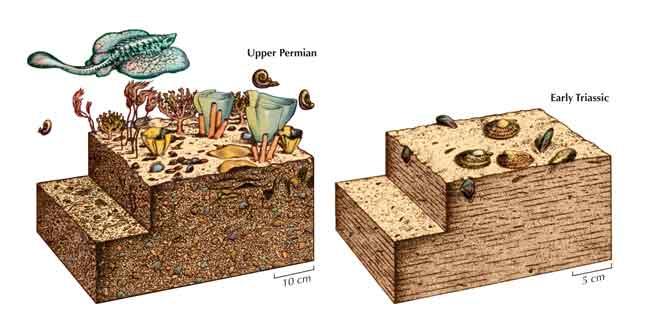 efectos de la extinción de Pérmico en el mar