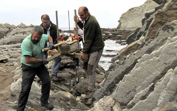 fósil de organismo marino rescatado en Zumaia