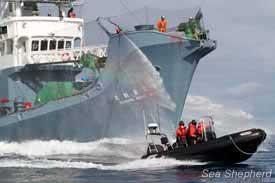 ballenero japonés repele un ataque de fuera borda de Sea Shepherd