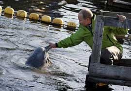 la ballena beluga Dasha es alimentada por Putin