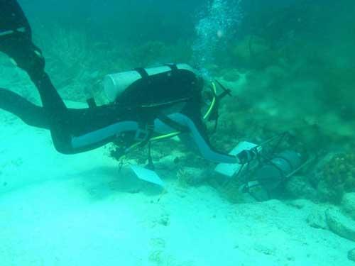 corales en aguas ácidas del Caribe