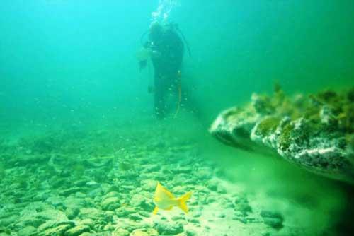 corales en aguas ácidas en el Caribe