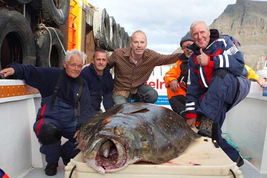 fletán gigante pescado en Islandia