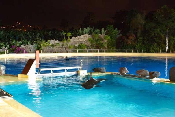 La orca Morgan en Lloro Parque, Tenerife