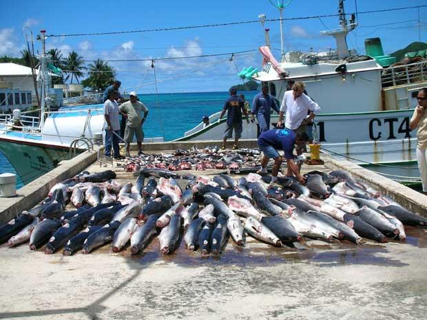 aleteo de tiburones