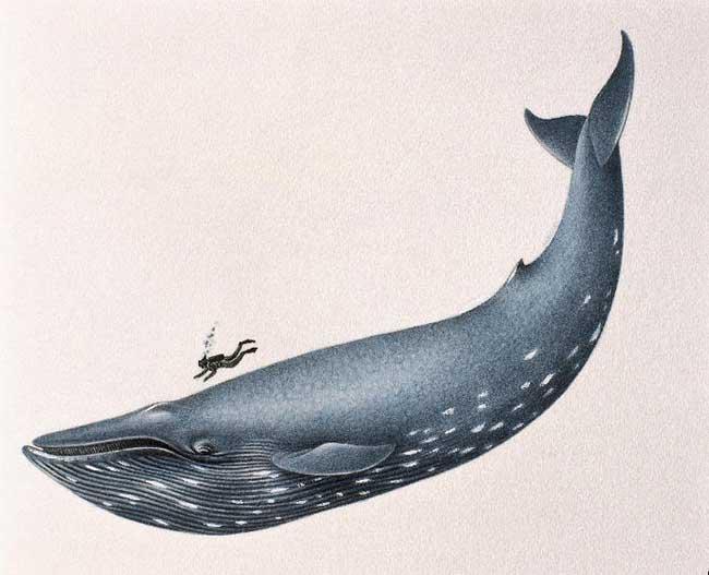 ballena azul dibujo