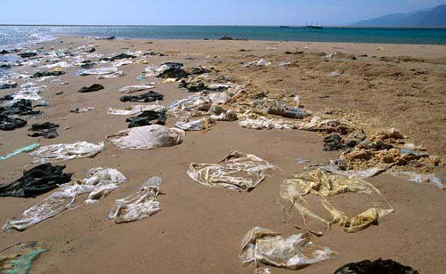 bolsas de plástico en una playa