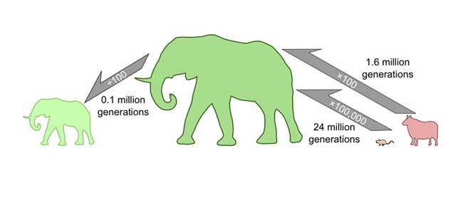 cambio del tamaño de los mamíferos
