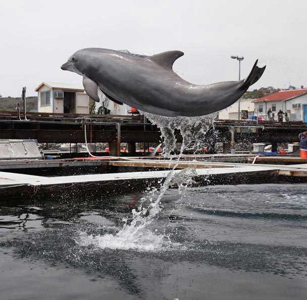centro de adiestramiento de delfines San Diego
