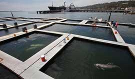 centro de adiestramiento de delfines de San Diego