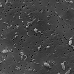 comunidad bacteriana marina