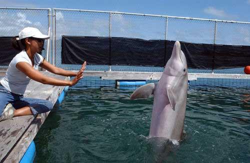 delfín y una entrenadora