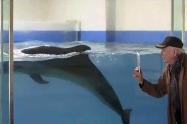 delfín en el museo de la ballena de Taiji, Japón