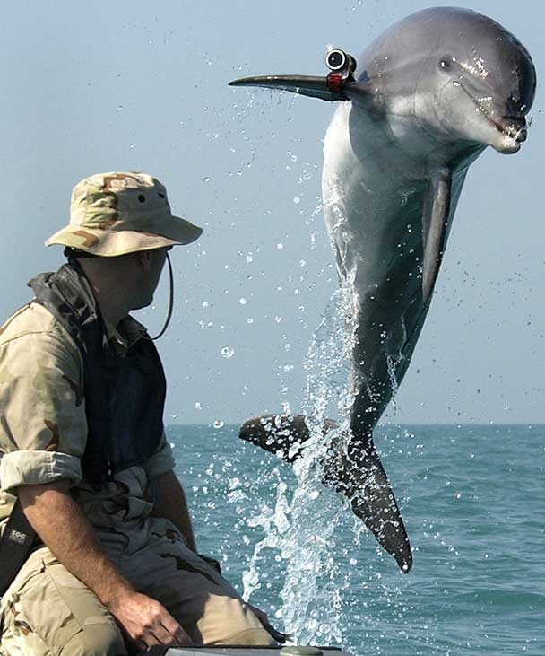 delfín de la US Navy