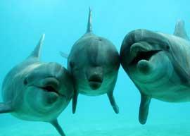 delfines del acuario Planòte Sauvage