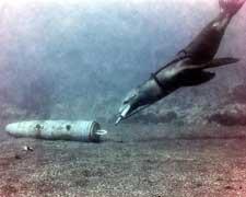 entrenamiento de un delfín por la marina USA
