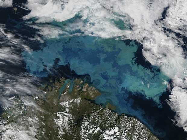 flor de fitoplancton en el Mar de Barens