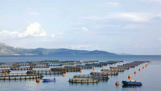 granja de acuicultura marina