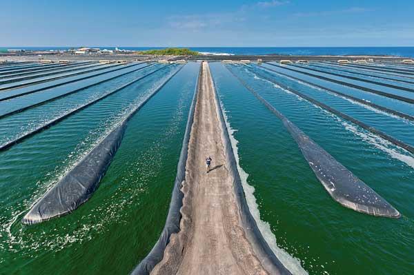 granja de algas marinas