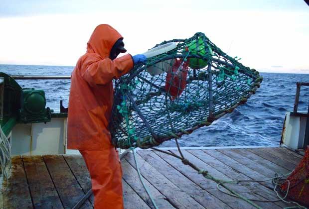 hidrofonos en una red de pesca