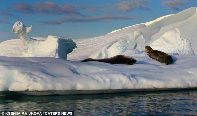iceberg en forma de dragón de hielo y focas