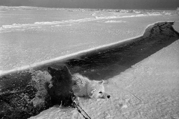 perro esquimal, Ragnar Axelsson