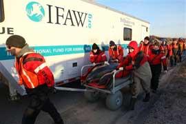 rescate de delfines en Cape Cod por el IFAW