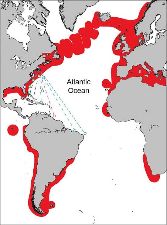 rutas migratorias del tiburón peregrino  y distribución