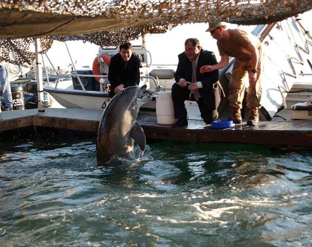 sistema militar de mamíferos marinos