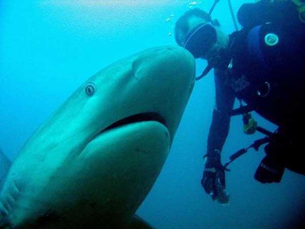 tiburón amigo de buzo