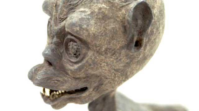 cabeza de pez mono