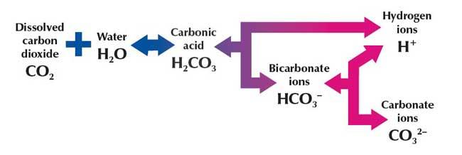 disolución de CO2 en el agua de mar