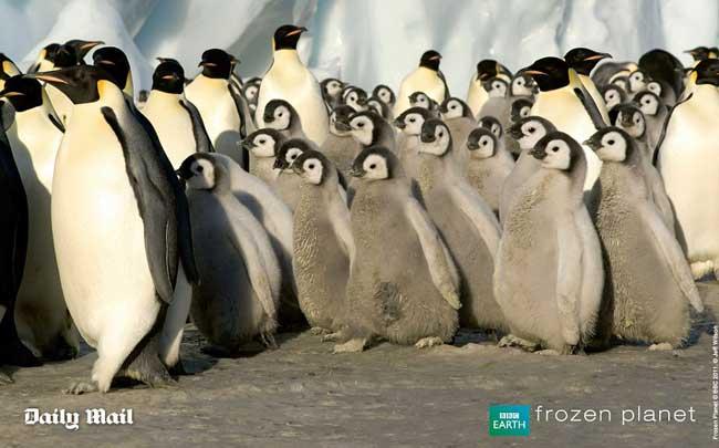guardería de pingüinos en la Antártida