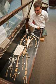 fósil de Kairuku grebneffi