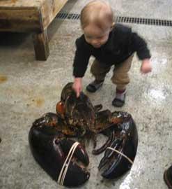 langosta gigante Rocky capturada en Maine con un niño