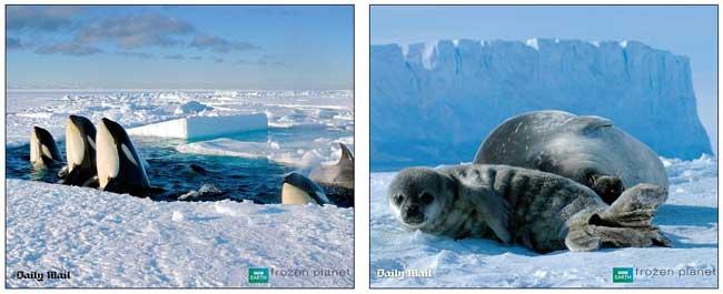 orcas y focas