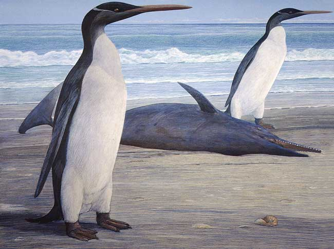 pingüinos Kairuku grebneffi junto a un delfín dentado