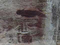 pintura rupestre de dugongo