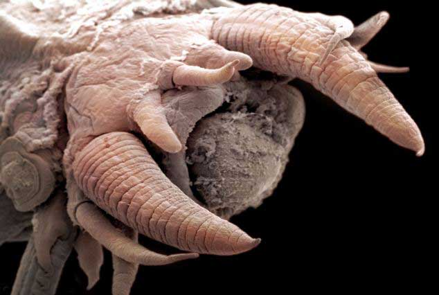 poliqueto o gusano escamoso