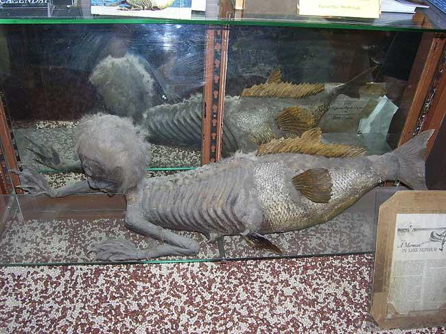 reliquia de pez mono
