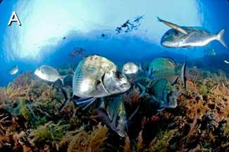 reserva marina del Mediterráneo sana