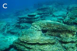 zona con baja biomasa de peces