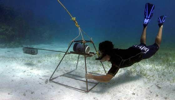 camara trampa para filmar tiburones