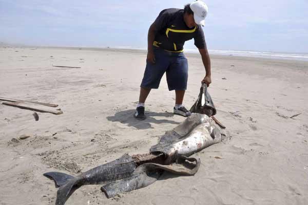 delfín muerto en una playa de Perú