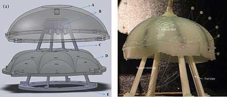 diagrama de una medusa Robojelly