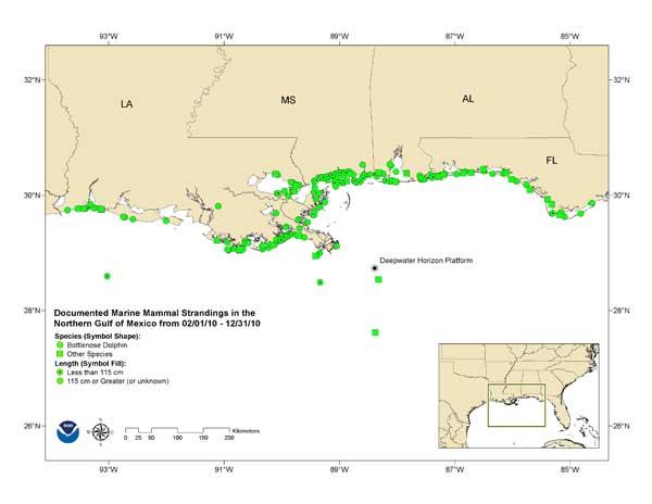 mapa de varamientos de delfines en el Golfo de México