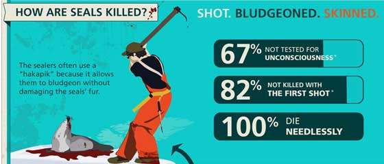 matanza focas Canadá