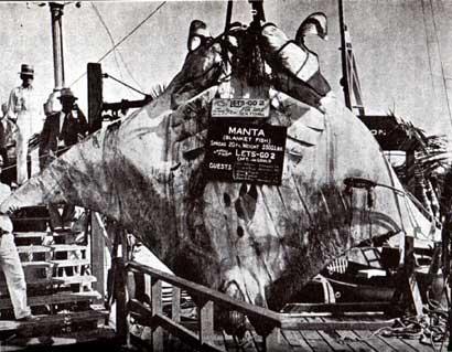 record de captura de manta raya gigante