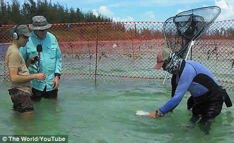 tiburón colocado boca abajo